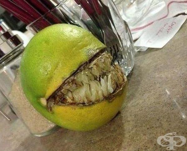 Братовчед ми има портокалово дърво, но този плод се оказа различен.