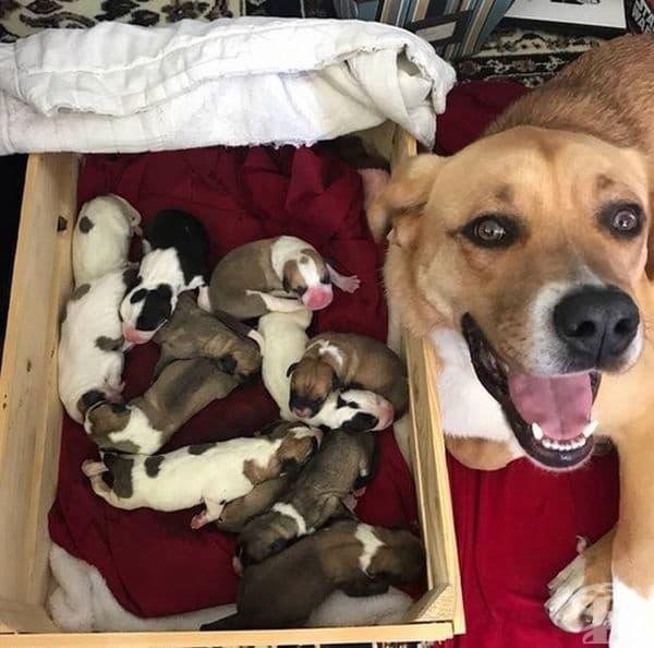 Просто погледнете тази щастлива майка.