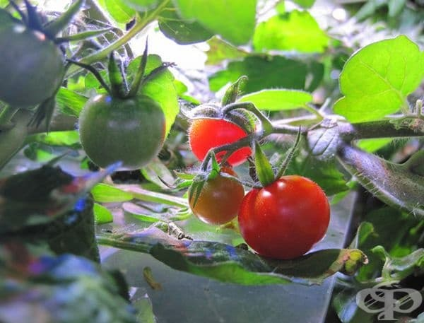 Растението ще може да диша нормално и ще изключите изсушаването или проникването на прекомерно количество влага.