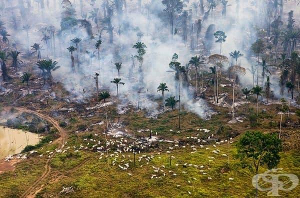 Амазонските джунгли в Бразилия са изгаряни за многократна употреба.