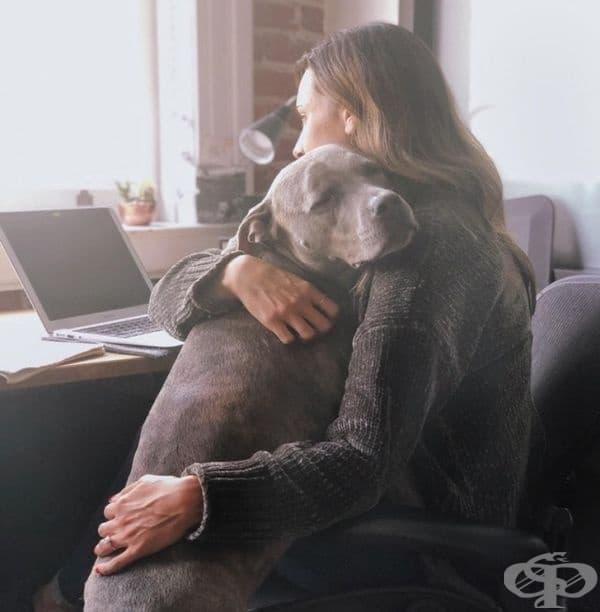 Всеки грижовен домашен любимец разбира кога неговият собственик има нужда от прегръдка.
