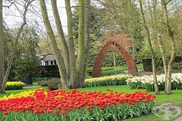 Всички цветя са разпределени по цветове или форма.