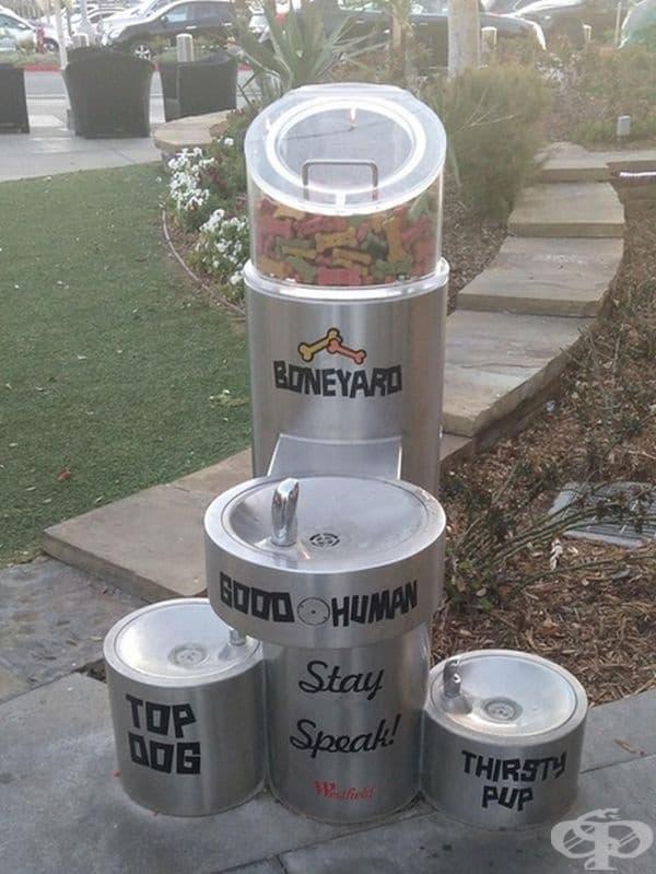 Улична чешма, приспособена и за кучета различни размери. В горната си част има контейнер с храна за четириногите.