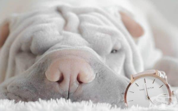 Кучетата се ориентират във времето и свикват с графика си по отношение на времето за хранене и разходки.