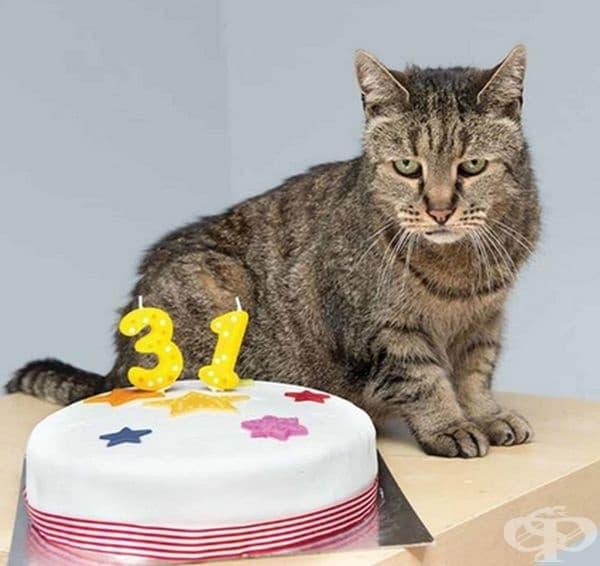 Най-старата котка в света се казва Крьом Пуф от Остин, Тексас. Живяла е от 1967 г. до 5 август 2005 г. и е починала 3 дни след 38-годишния си рожден ден.