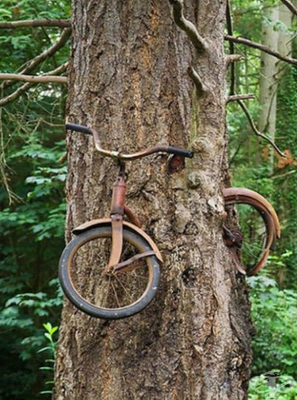 25 снимки на дървета със силно желание за живот