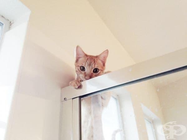 """""""Моята котка е достатъчно енергична, за да се качи горе и да погледне как си взимам душ."""""""
