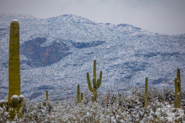 Сняг покри кактусите в пустинята Аризона