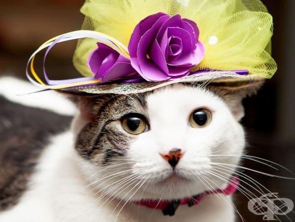 Фотосесия на котки с очарователни шапки, вдъхновени от кралската сватба