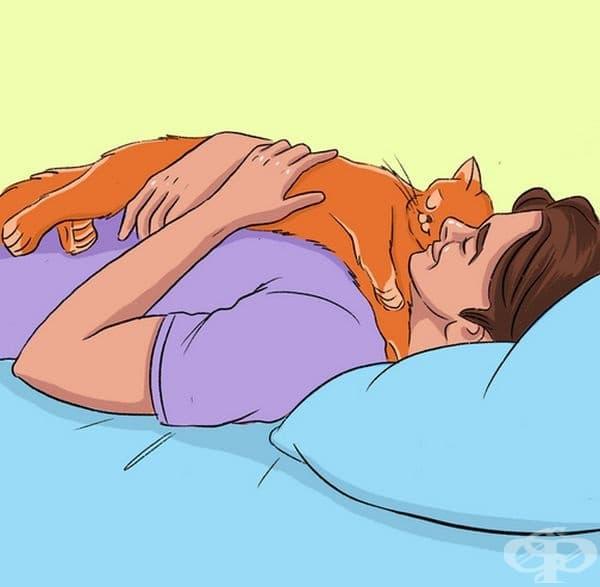 Котката ви спи върху вас, защото сте голяма и удобна възглавница.