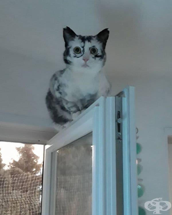 Според Никол любимото занимание на Ели е да стои на вратата и да се преструва на снежна сова.