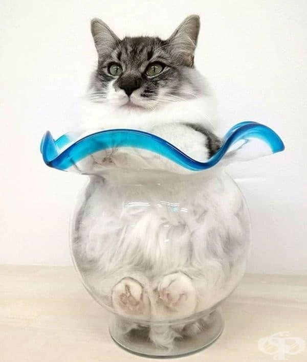 Красива котка в красива вазичка.