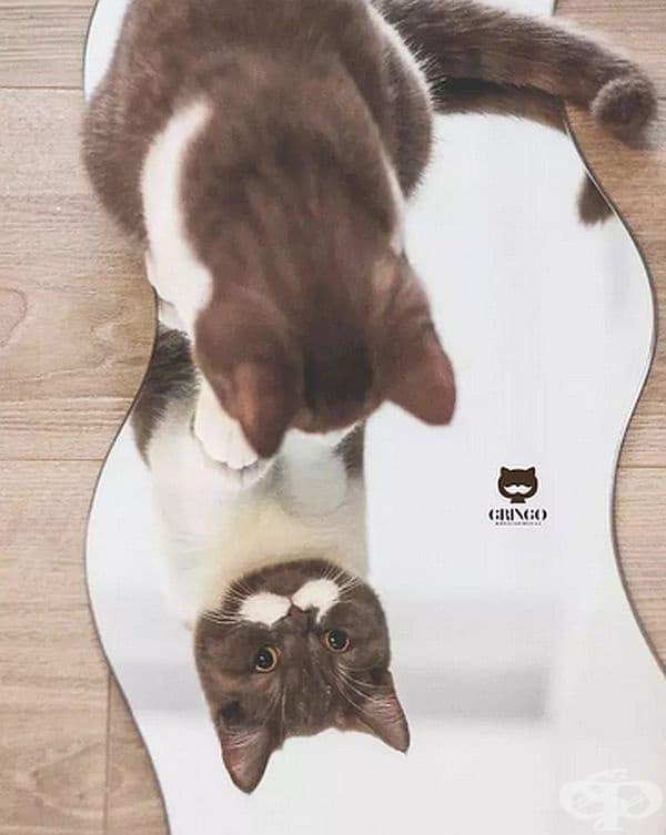 Това е Гринго – очарователната котка с мустаци, спечелила хиляди сърца