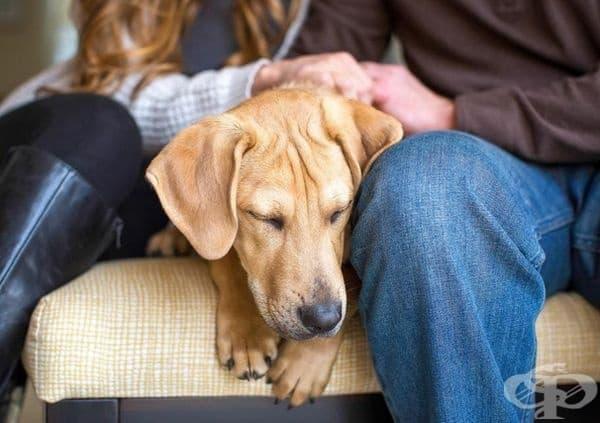 """Победител в категорията """"Спасяване на кучета"""". Фотограф: Соня Колб."""