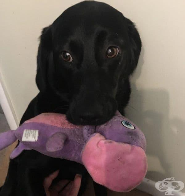 Той не се страхува от гръмотевици, но обича да носи плюшената си играчка,... за успокоение.