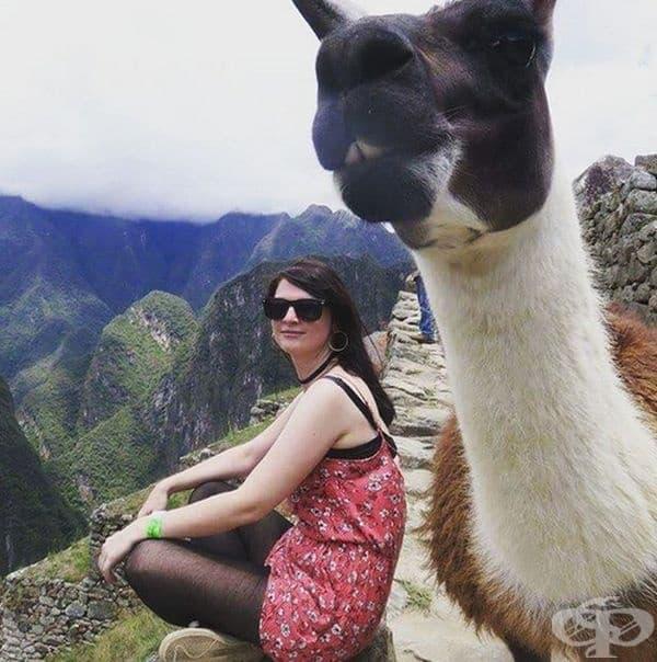 """""""Тази лама измести вниманието от мен на върха Мачо Пикчу, Перу."""""""