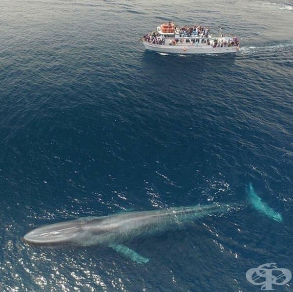 Голям кораб и огромен кит.