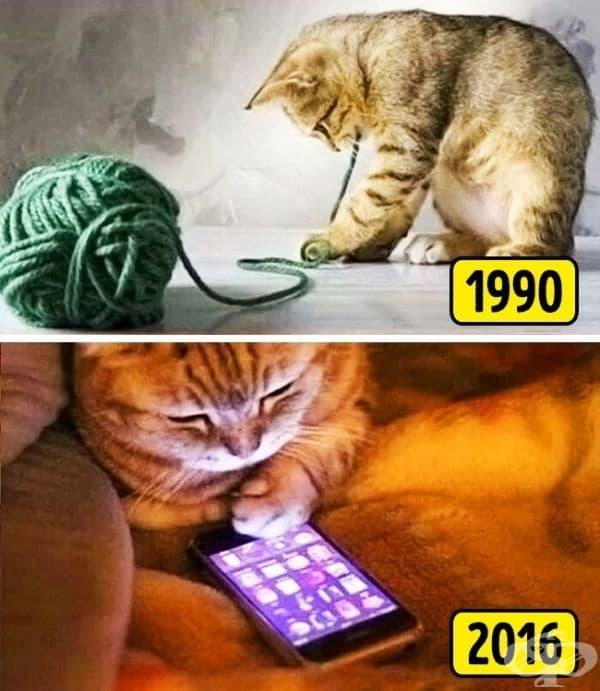 Дори котката ви разполагаше с най-обикновени удоволствия.