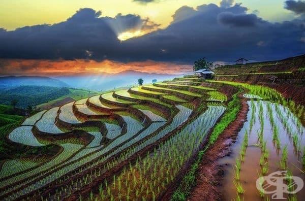 Тези виетнамски оризови полета може да се възхищавате безкрайно дълго.
