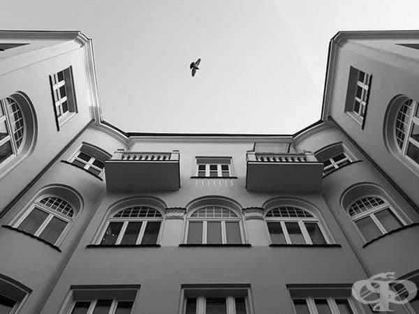 Всъщност това не е огледална сграда, но изглежда като такава. Само птицата може да стане ясно.