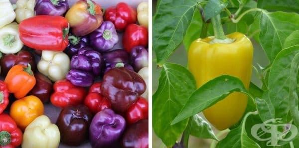 Чушките също са плодове. Всички знаем, че чушките са пълни със семена, следователно, както и да ги наричаме в кухнята, те са плодове.
