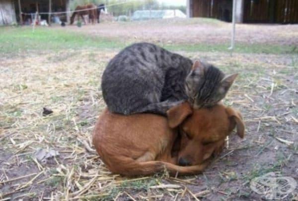 Доказателство за това, че приятелството между котка и куче е възможно.
