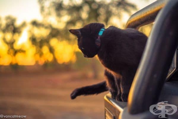 """""""Пътуването с котка е истинско приключение. Никога не се чувстваш самотен."""""""