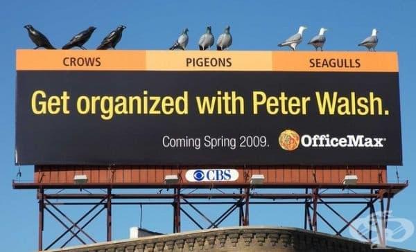 Питър Уолш организира всичко, не и гълъбите.