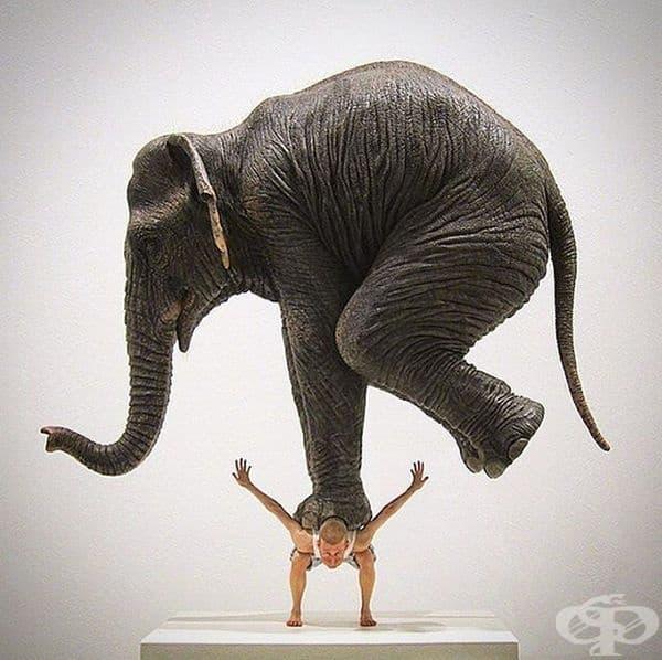 Фабиен Мерел – Слон върху човек, 2013 г.