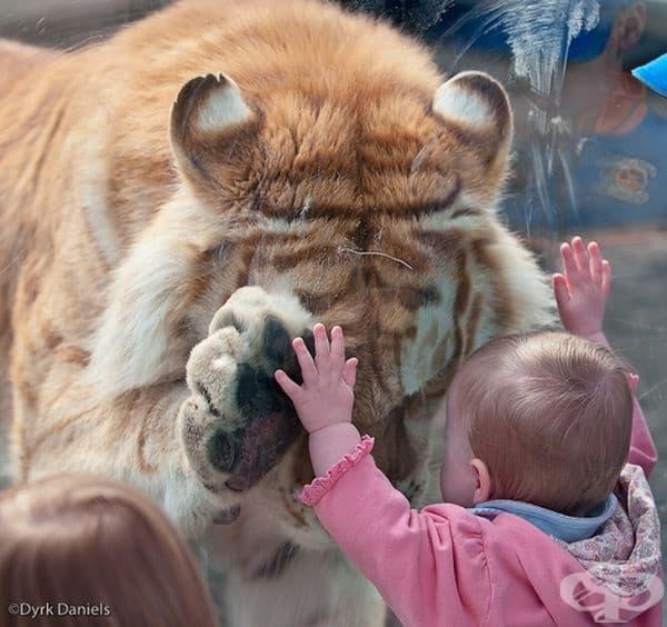 """Когато две напълно различни същества се опитат да """"кажат"""" едно на друго, че никой от тях не е сам."""