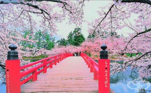 10 снимки, които ще ви накарат да се влюбите в Япония