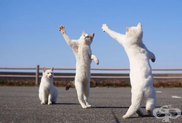 Да танцувате.