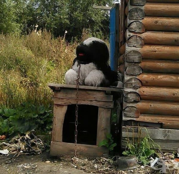 Това куче изглежда като истинско, но само отблизо може да се разбере това.