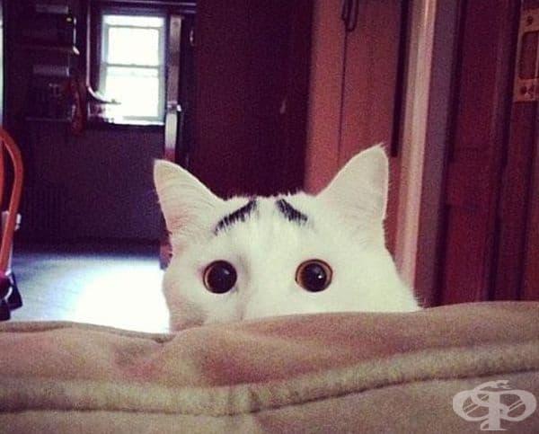 Котката, която винаги е концентрирана