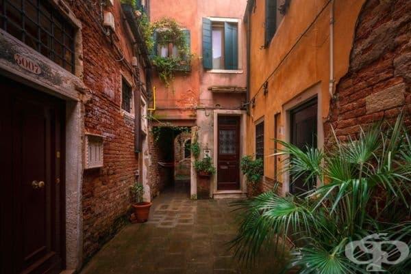 Растенията в комбинация с дъжда и цветовете на къщите създават приказна атмосфера.
