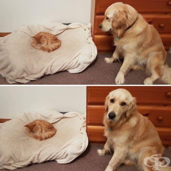 Когато сте прекалено учтиви, за да помолите някого да напусне леглото ви
