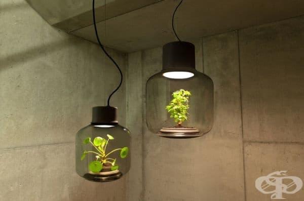 Лампи с растения. Тези иновационни растителни лампи са проектирани за апартаменти с липса на естествена слънчева светлина. Растенията в тях имат устойчива екосистема и виреят спокойно в подобни условия.