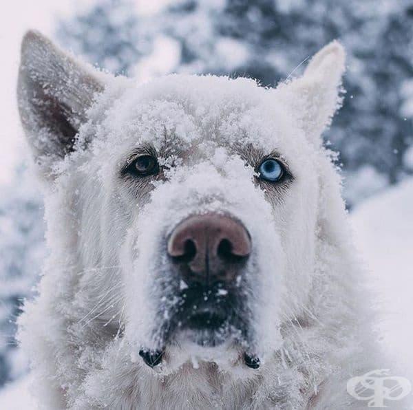 Снежно куче. Колорадо.