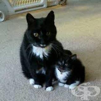 15 невероятни котки и техните малки копия