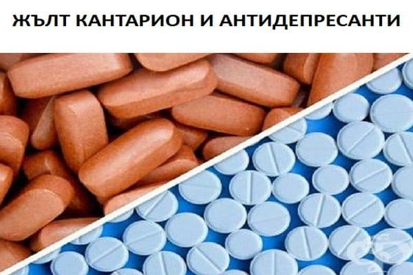 Действието на някои лекарства може да бъде повлияно от добавки като жълт кантарион. Човек може да изпита тревожност и треска при подобна комбинация. Нивата на серототин ще се повишат и може да се предизвикат гърчове.
