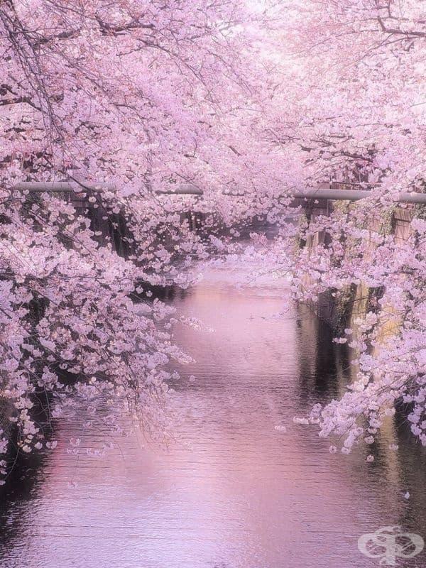 Река Мегуро, Япония.