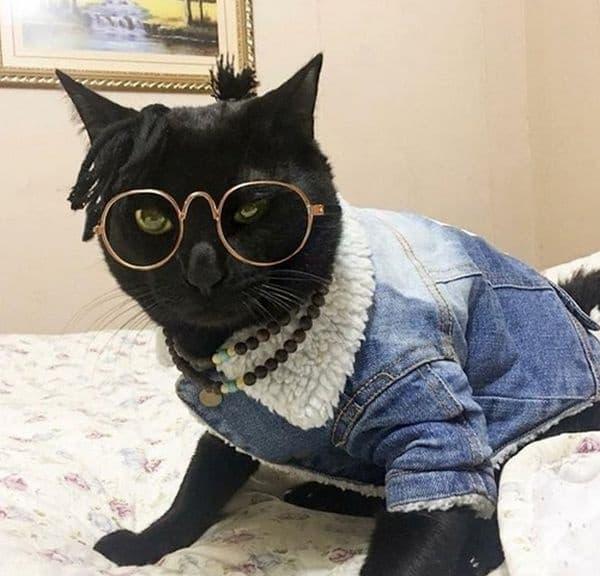 Котка от ново поколение.