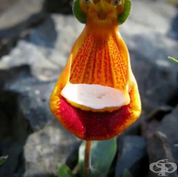 Цветя, които наподобяват различни животни и фигури