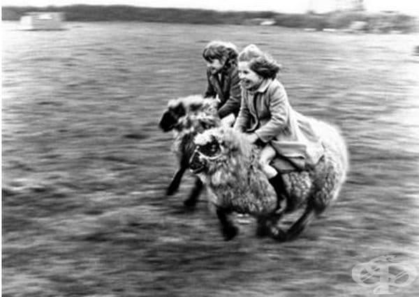 Две момичета яздят овце.
