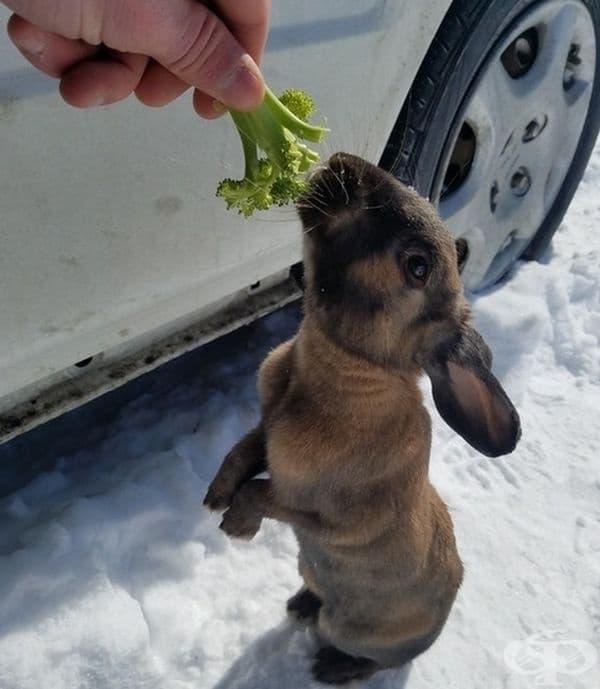 При липсата на моркови и броколите вършат работа.