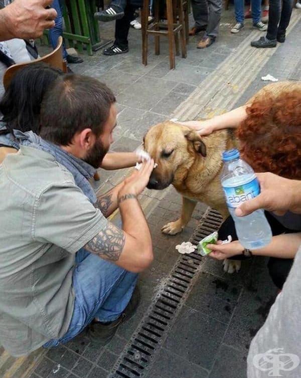 Хората помагат на кучето, пострадало от сълзотворен газ, по време на протестите в Турция.