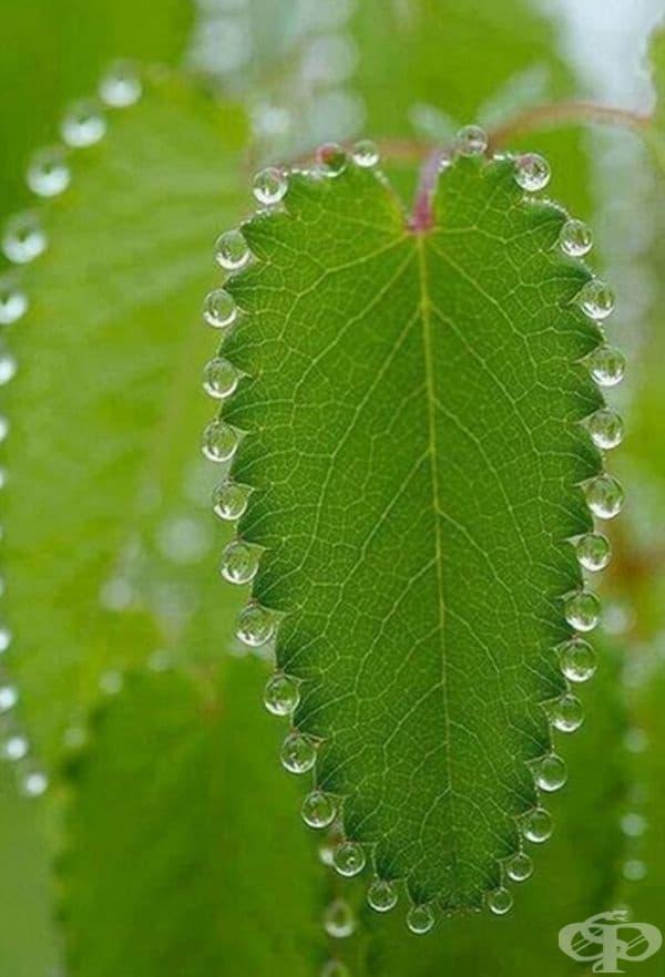 Капките на дъжда са се разпределили безупречно по това листо.
