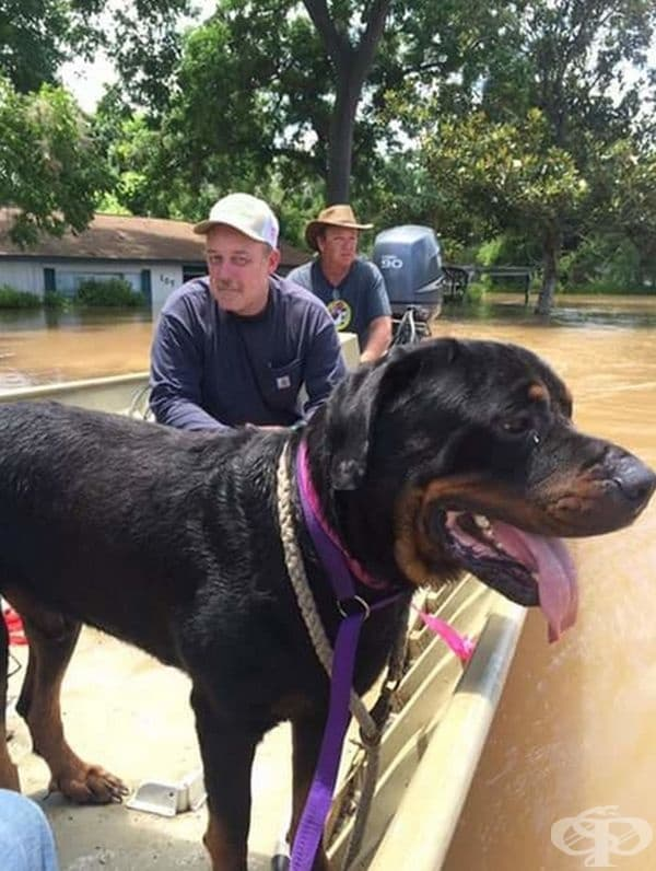 """""""Баща ми и малкият ми брат спасяват кучета от наводненията."""""""