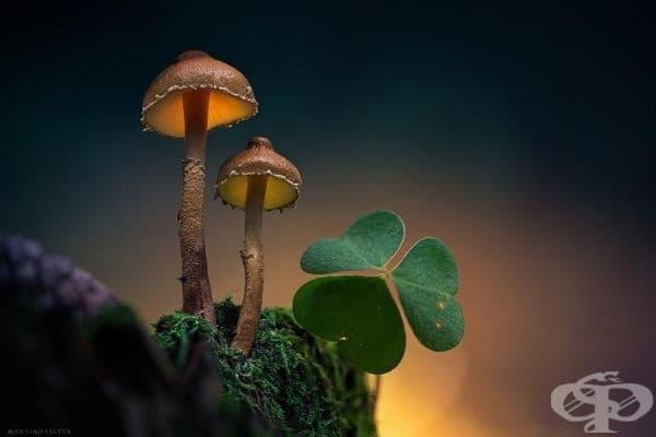 Светът на растенията.