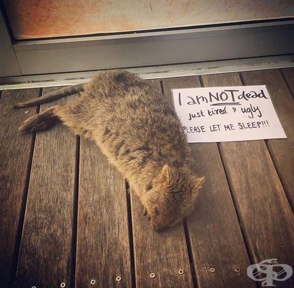 """""""Аз не съм мъртъв, просто съм уморен и грозен. Моля ви, оставете ме да се наспя!"""""""